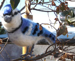 Needle felted blue jay by Throughawolfseyes