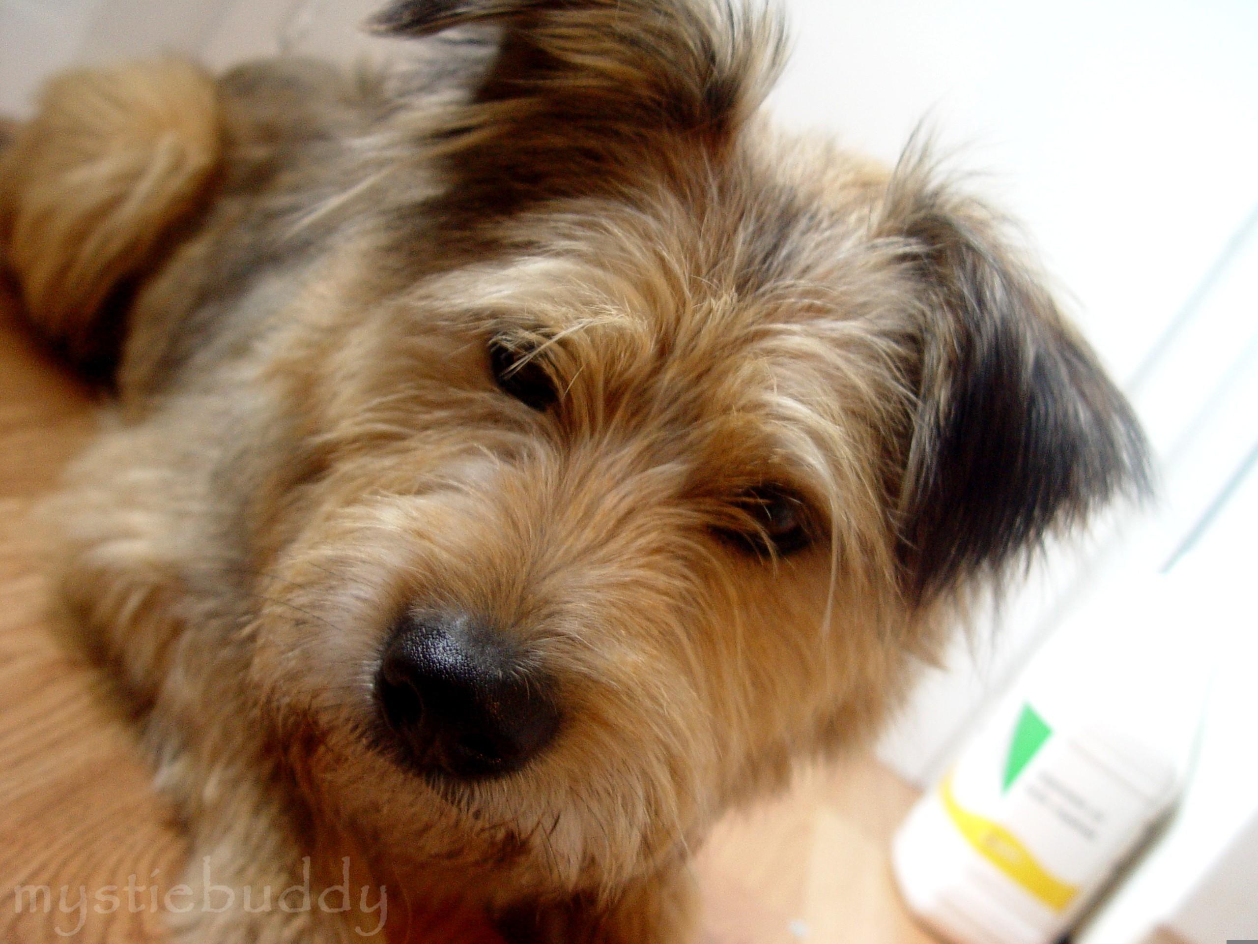 Photo de nos chiens batards! __tao_quaver____by_mystiebuddy-d3251s0