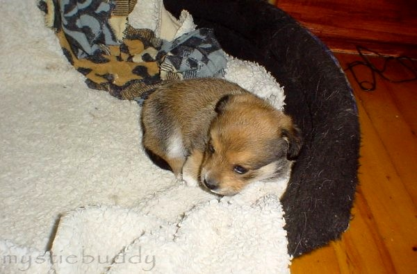 De chiot a chien? - Page 4 __a_little_too_small___by_mystiebuddy-d32bgyw