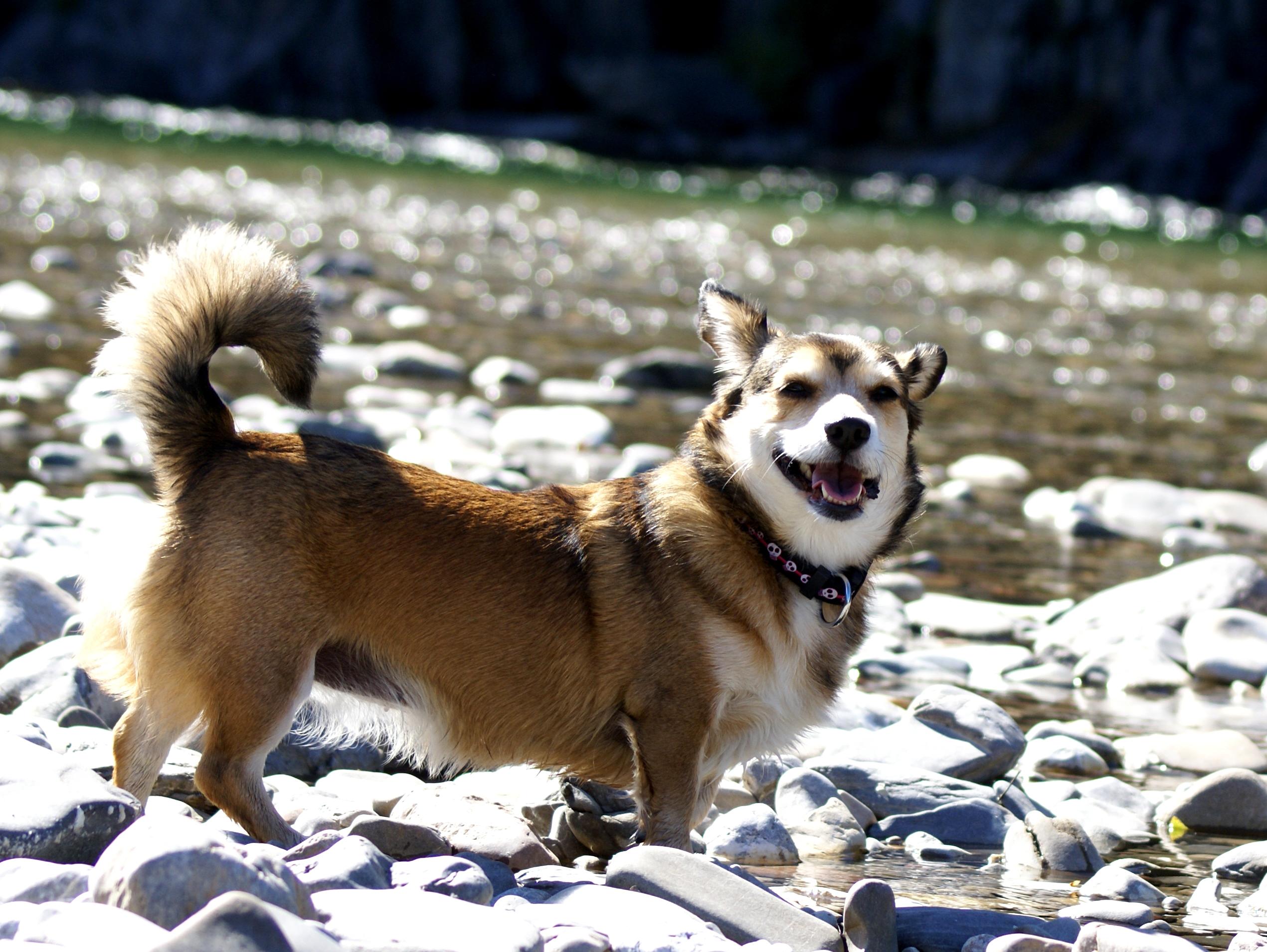 Photo de nos chiens batards! Mystiee_by_mystiebuddy-d4nokfx