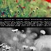 Icon - Flowers 02 by sheneedsapriest