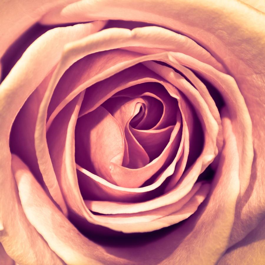 Rose by BaurMurza