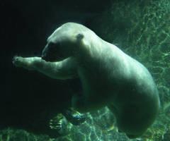 Polar Bear by motubufo