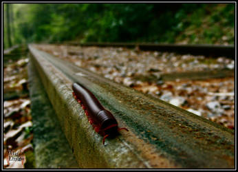 Traveling Millipede 1 by XpiecemealX