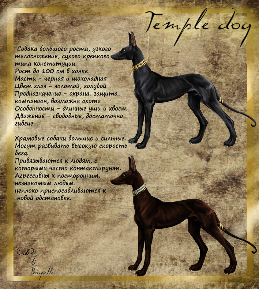 Temple dogs - breed by Percyvelle