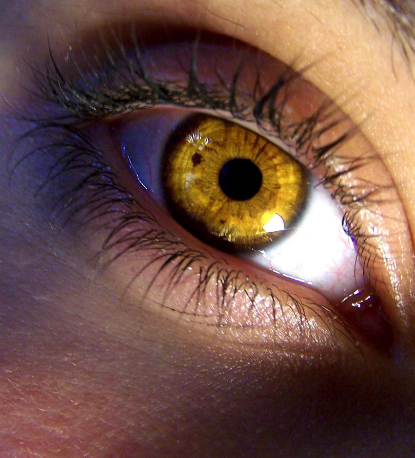 yellow eyes - photo #5