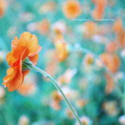 Goodbye Spring by morrighan03