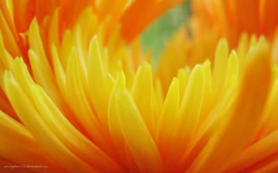 Beautiful Flames by morrighan03