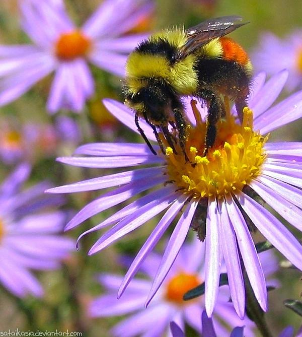 pollen by sataikasia