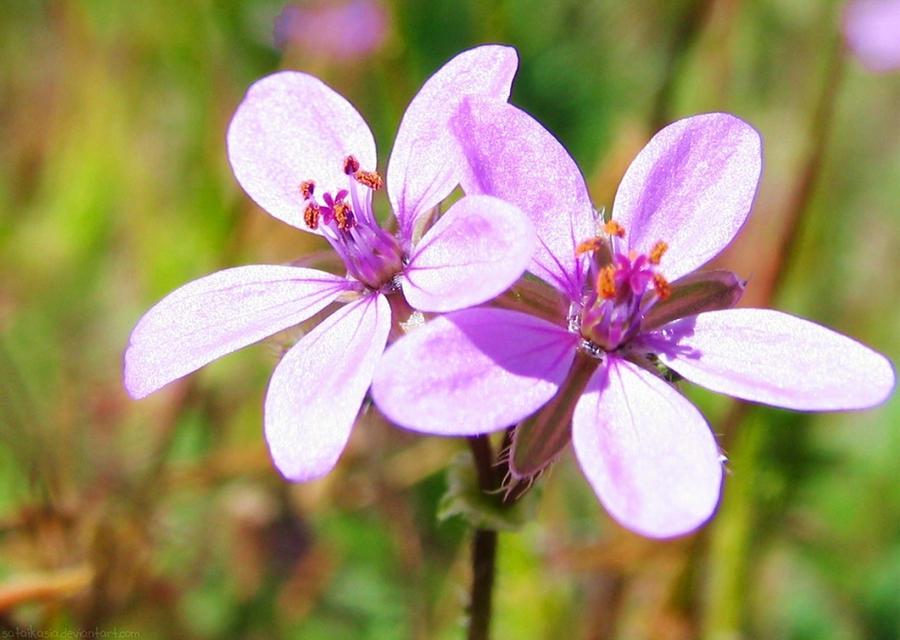 purple spring by sataikasia