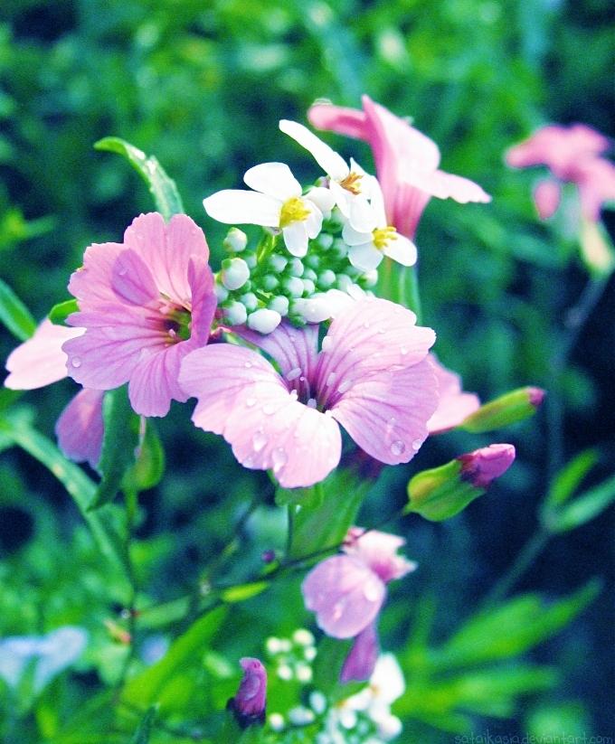 Spring flowers by sataikasia