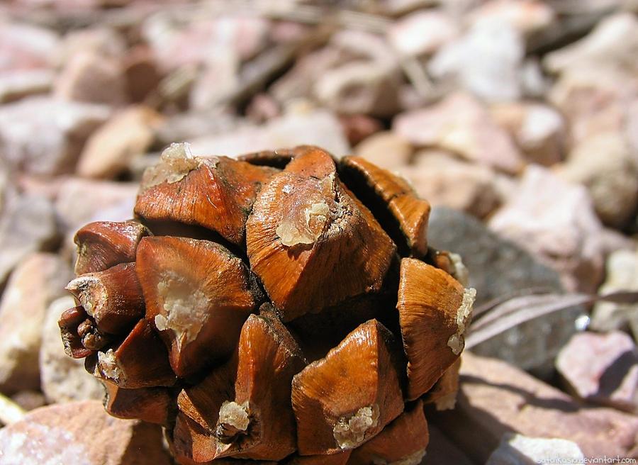 pine cone by sataikasia