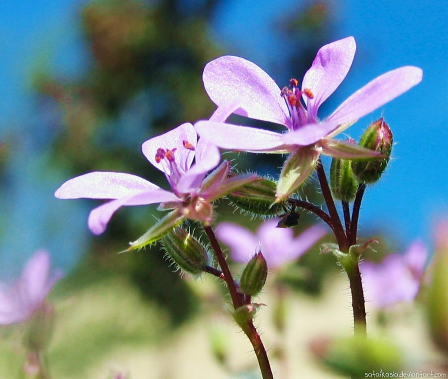 little flowers by sataikasia