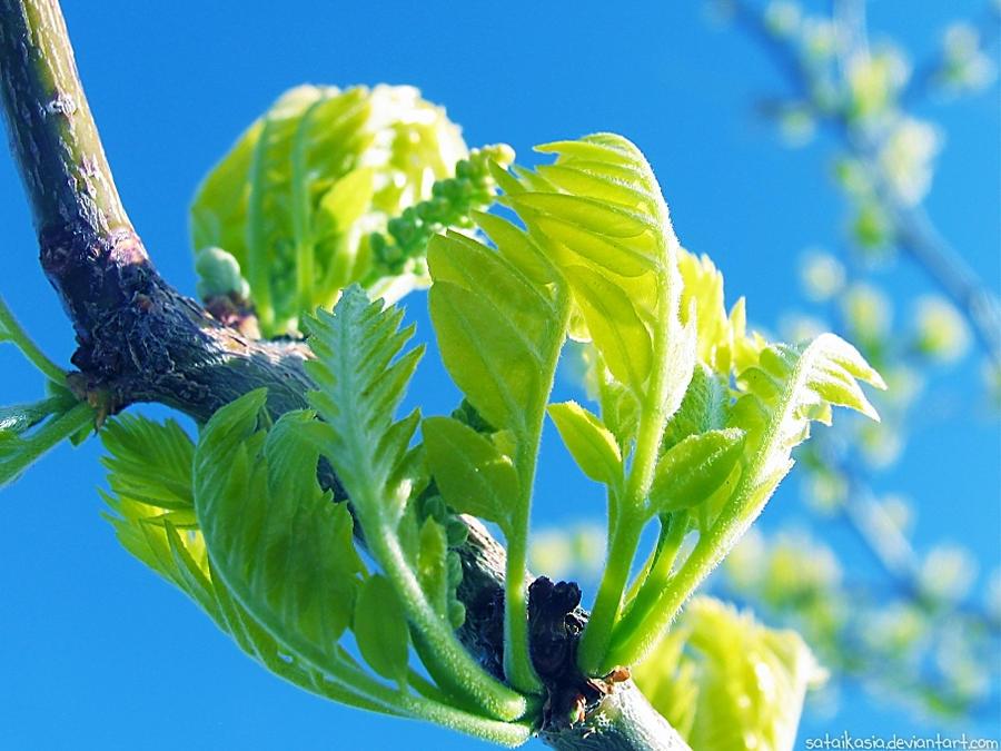 new leaves by sataikasia