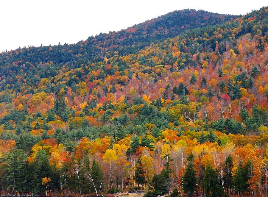 autumn colors by sataikasia