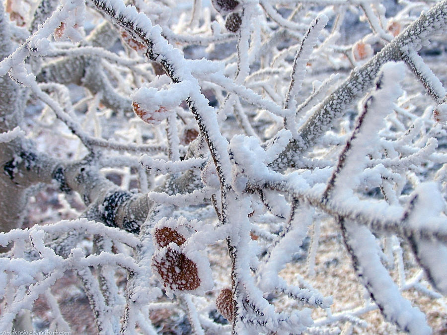 snowy branches by sataikasia