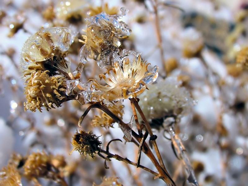 icy nature by sataikasia