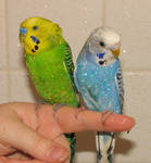 shower birds
