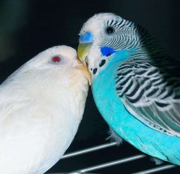 Dove and Theo by sataikasia