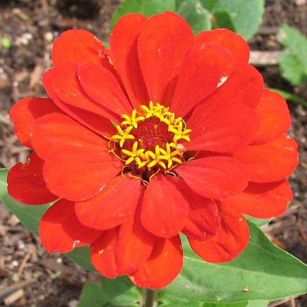 red flower by sataikasia