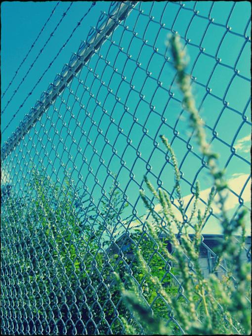 fence by sataikasia