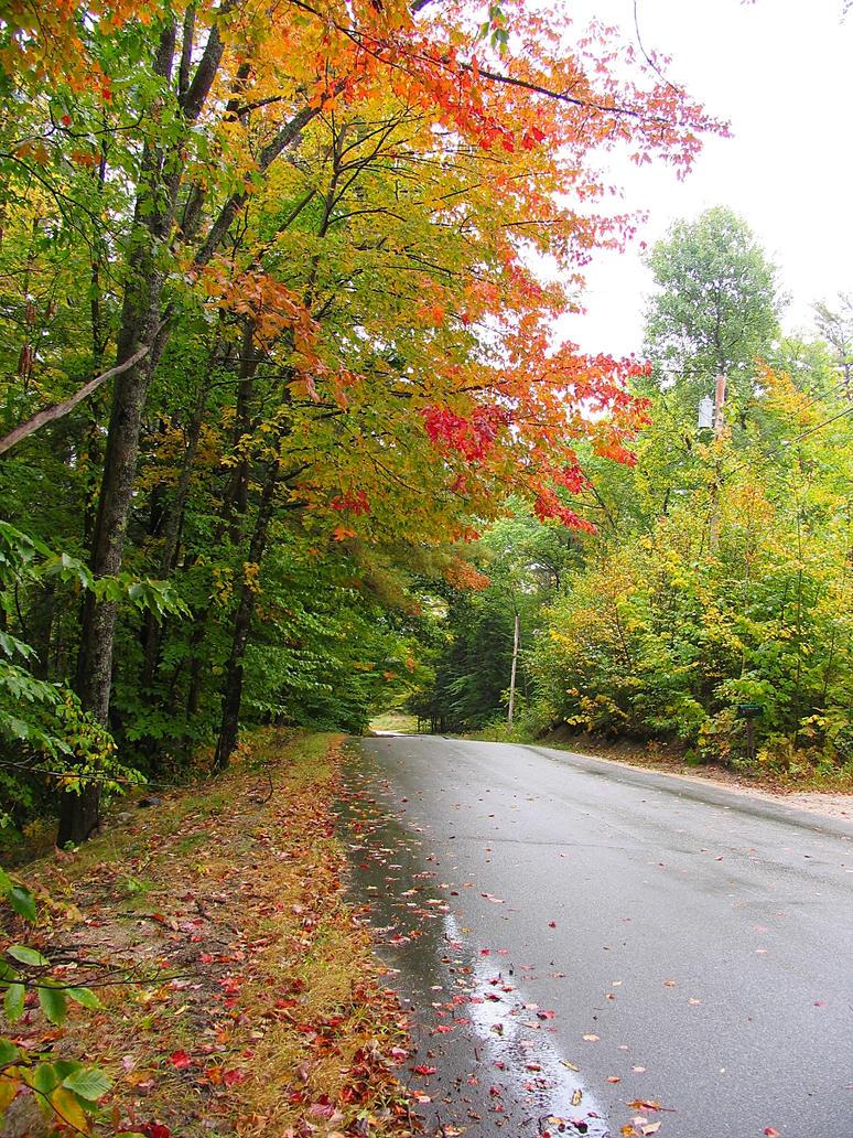 autumn road in Maine by sataikasia