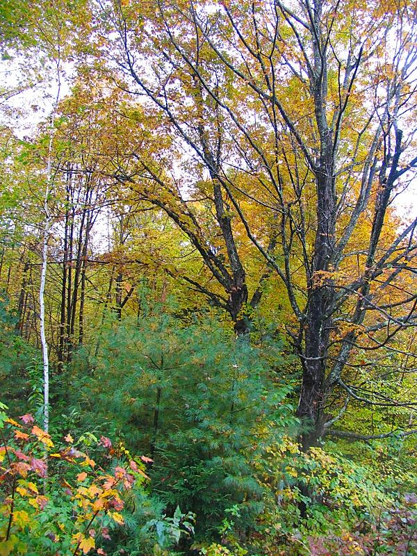 autumn foliage in Maine by sataikasia