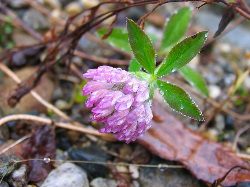 rainy purple by sataikasia