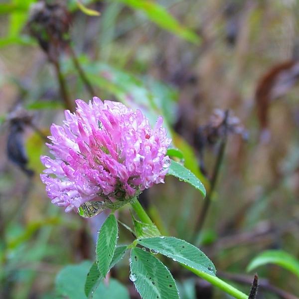 autumn purple by sataikasia