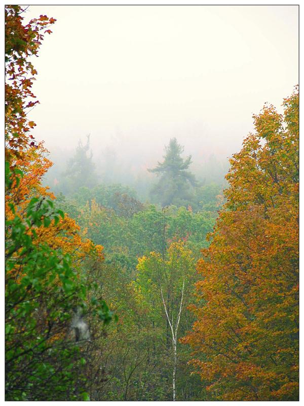 autumn mist by sataikasia