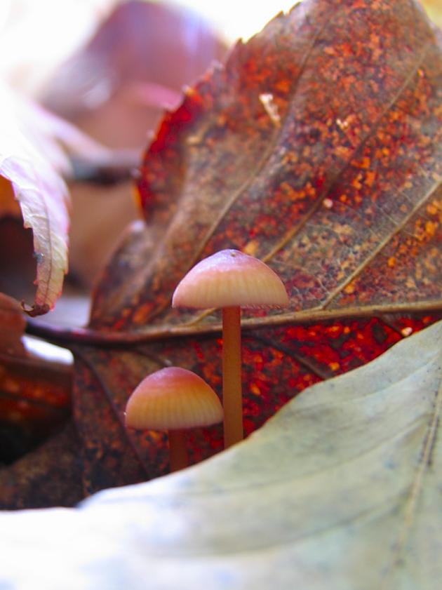 autumn mushrooms by sataikasia