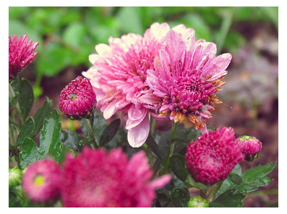 rainy autumn flowers by sataikasia