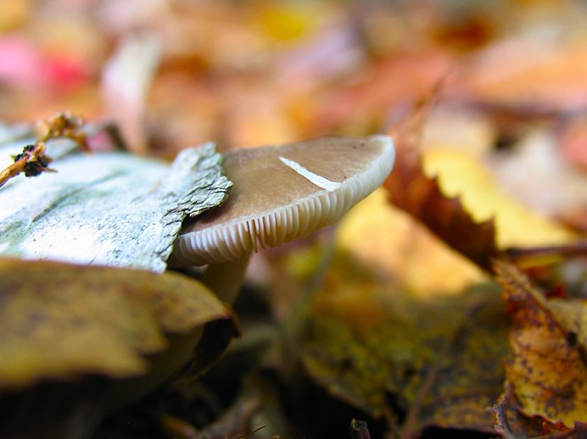 forest mushroom by sataikasia