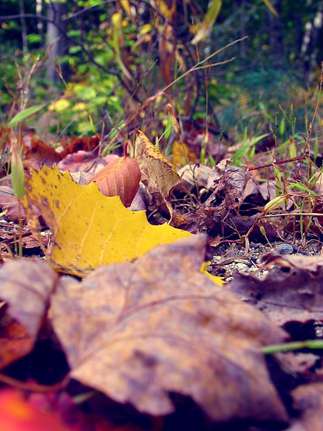 forest floor by sataikasia
