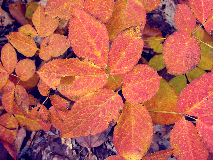 autumn foliage by sataikasia