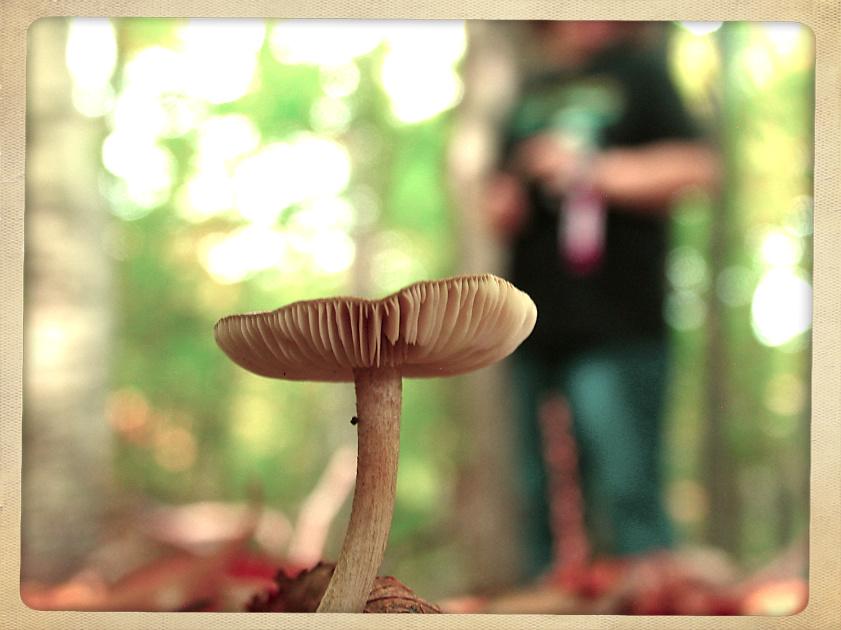 mushroom pose by sataikasia