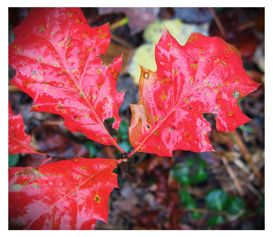 autumn red by sataikasia