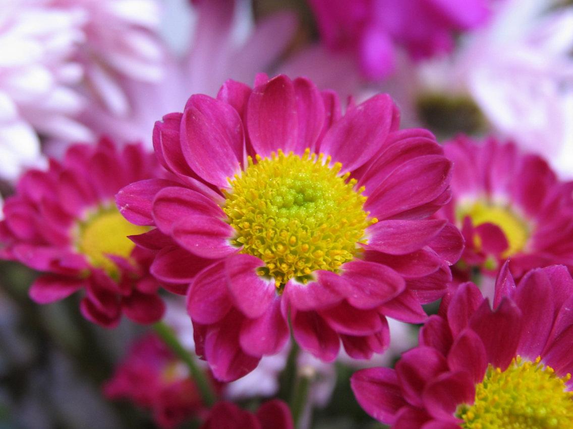 Valentine flowers by sataikasia
