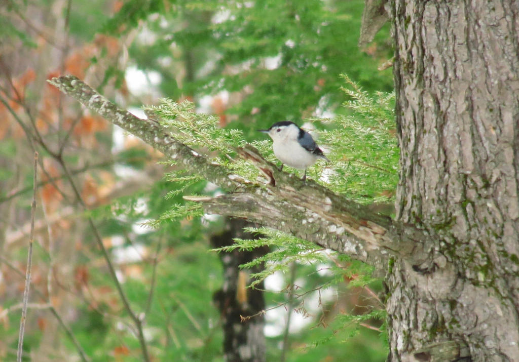 little bird by sataikasia