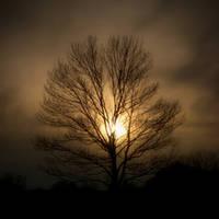 Tree Soul by sixwings