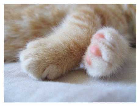 Baby Paws