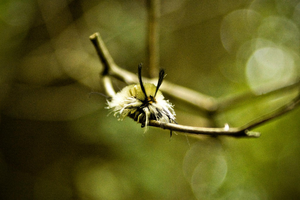 Fuzzy Caterpillar by Valentine-Photo