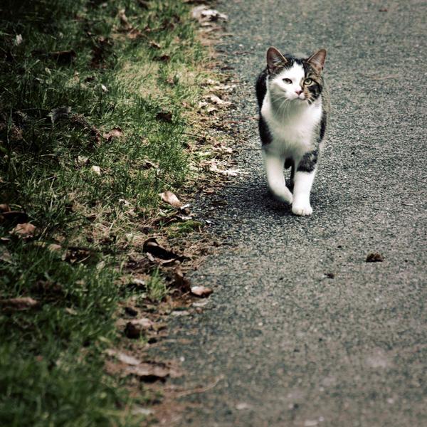 Catwalk. by Blutr0t