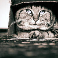 The Cat Container ii. by Blutr0t
