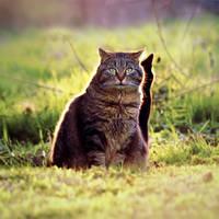Shadow Shadow Cat. by Blutr0t