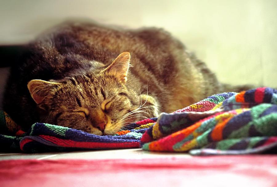 Blissful Sleep. by Blutr0t