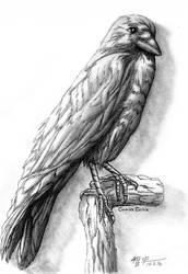Corvus Corax by RhunnNecro