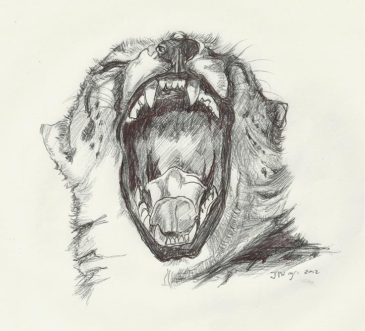 Roaring 1 by Stcyr74