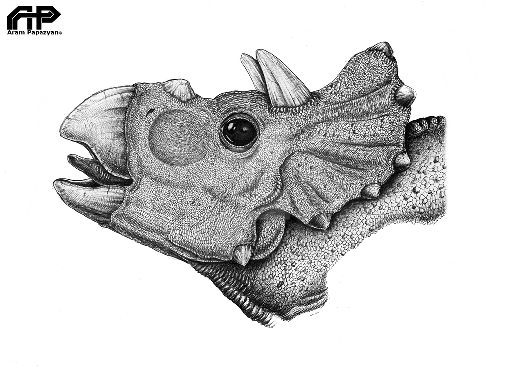 baby_triceratops_portrait_by_aram_rex-d9m62zj.png