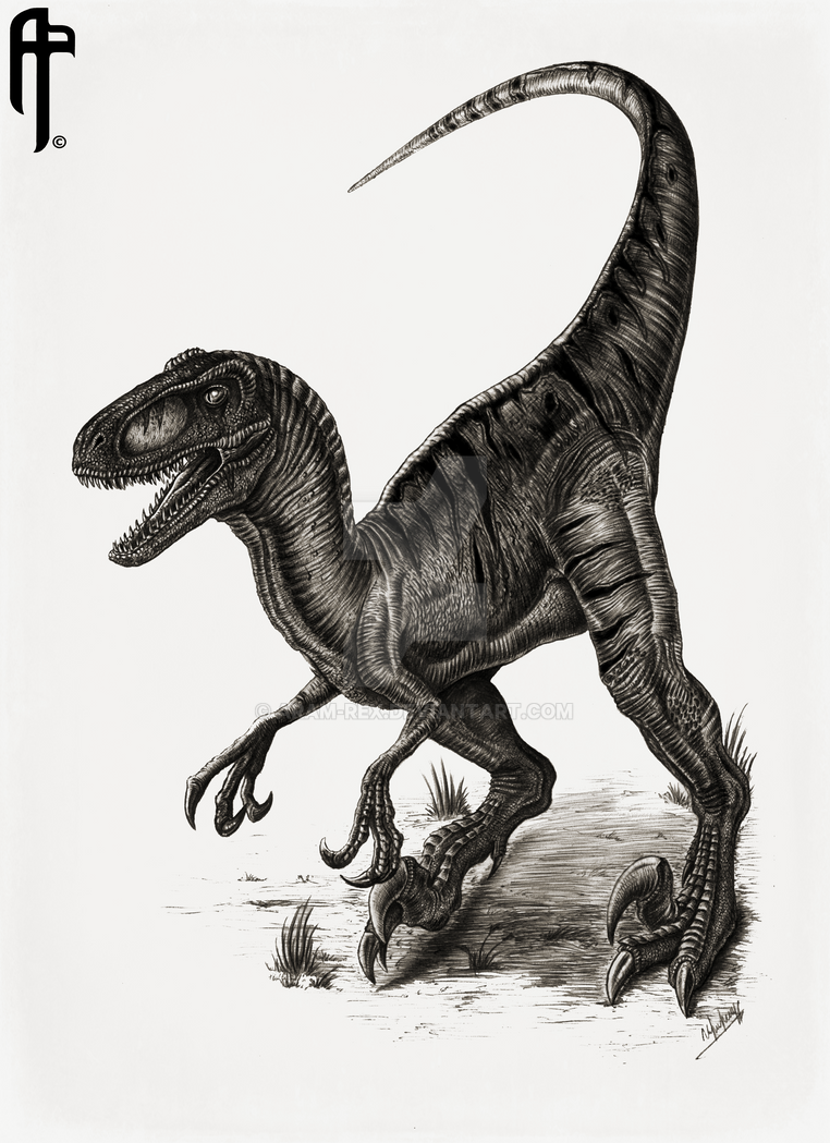 jurassic_park_velociraptor__utahraptor__by_aram_rex-da7j8s0.png